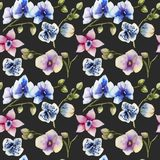 Watercolor multicolored orchids of different varieties seamless pattern. Hand painted on a dark background Stock Image