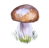 Watercolor mushroom Stock Images