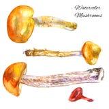 Watercolor mushrooms hand drawn illustration vector illustration
