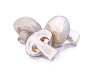 Watercolor mushrooms. Natural food. art Stock Photography