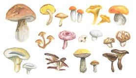 Watercolor mushrooms set. Stock Image