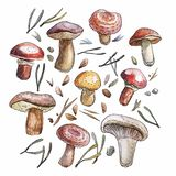 Watercolor mushrooms set, naturalistic illustration stock illustration