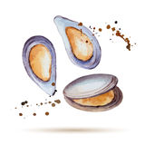Watercolor mussels Stock Photo