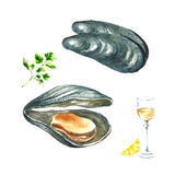 Watercolor mussels. Stock Images