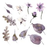 Watercolor mystical collection. Flowers, leaves and plants. Brown and violet royalty free illustration