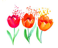 Watercolor naive atyle tulip flower painting. Hand drawn spring Royalty Free Stock Image
