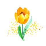 Watercolor naive atyle tulip flower painting. Stock Photography