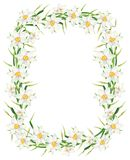 Watercolor narcissus flower rectangle frame. Hand drawn daffodil wreath illustration isolated on white background royalty free stock image