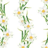 Watercolor narcissus flower seamless pattern. Hand drawn daffodil border illustration on white background. Floral design royalty free stock image
