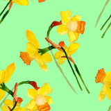 Watercolor narcissus seamless pattern. Narcissus seamless pattern.Watercolor pattern. Handdrawn royalty free illustration