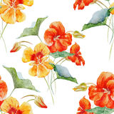 Watercolor nasturtium flower pattern Stock Photography