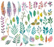 Watercolor natural collection. Leaves, feathers and berries for beautiful design Stock Image