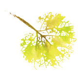 Watercolor natural leaf. Eco logo, creative work. Isolated object on a white background. Royalty Free Stock Photos