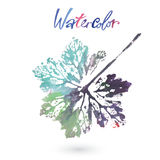 Watercolor natural leaf made in the original technique. Eco logo, creative work. Isolated object. On a white background. Painted by hand Stock Photos