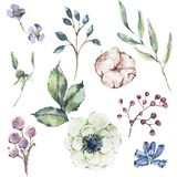 Watercolor natural set of anemone, wildflowers, cotton vector illustration