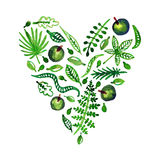 Watercolor nature vector heart with leaves, apples and other plants (green). Perfect for invitations and other design. Royalty Free Stock Photography