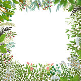 Watercolor nature wreath Royalty Free Stock Images
