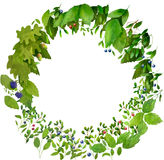 Watercolor nature wreath Stock Photo