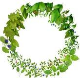 Watercolor nature wreath Stock Photo