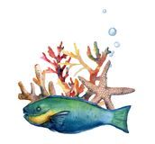 Watercolor nautical border with parrotfish. Hand painted underwater illustration with parrotfish, starfish, coral reef. And air bubbles isolated on white Royalty Free Stock Image