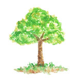 Watercolor Oak Tree, Hand Drawn and Painted Royalty Free Stock Photography