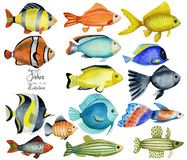 Watercolor oceanic fishes collection. Hand painted isolated on a white background stock illustration