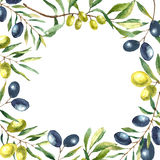 Watercolor olive branch background. Stock Photos