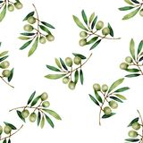 Watercolor olive branch isolated on white background. royalty free illustration