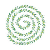 Watercolor olive swirl wreath. Isolated illustration on white background. Organic and natural concept Stock Photography