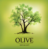 watercolor olive tree. Olive oil.For labels, pack Stock Images