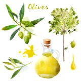 Watercolor olives set Stock Image