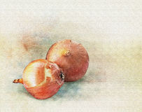 Watercolor onions Royalty Free Stock Images