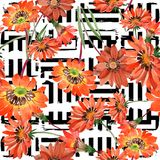 Watercolor orange gazania flowers. Floral botanical flower. Seamless background pattern. stock illustration