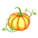 Watercolor orange pumpkin and green leaves Stock Photo
