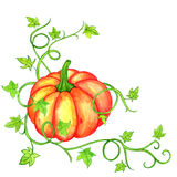 Watercolor orange pumpkin and green leaves Royalty Free Stock Photography