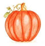 Watercolor orange pumpkin Stock Photography