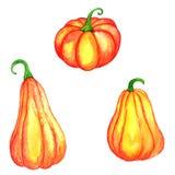 Watercolor orange pumpkins Stock Image