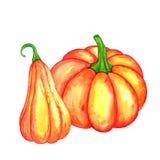 Watercolor orange pumpkins Stock Images