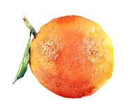Watercolor orange and sliced orange fruit isolated on a white. Background illustration royalty free illustration