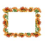 Watercolor orange sunflower flower. Floral botanical flower. Frame border ornament square. royalty free stock photos