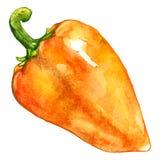 Watercolor orange yellow sweet bell Bulgarian pepper vegetable isolated Stock Photo