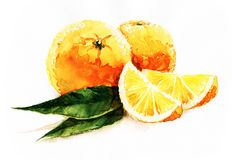 Watercolor oranges. Composition of oranges full and sliced, leaves, white background. Watercolor art Stock Photo