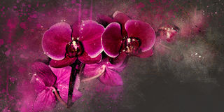 Watercolor orchid Royalty Free Stock Photo