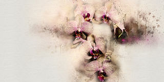 Watercolor orchid Stock Images