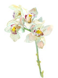 Watercolor orchid branch Royalty Free Stock Photography