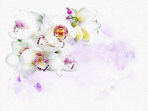 Orchid Watercolor background Stock Photos