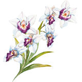 Watercolor orchid flowers Stock Photo