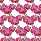 Watercolor Orchid flowers pattern Royalty Free Stock Photo