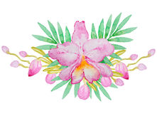 Watercolor orchid Stock Image