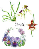 Watercolor orchid set royalty free illustration